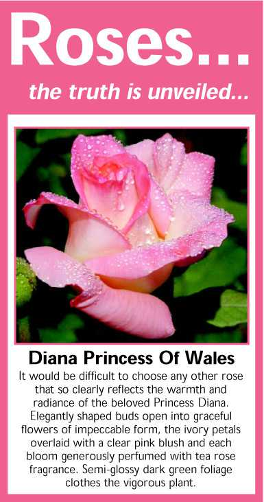 004 Diana Princess Of Wales