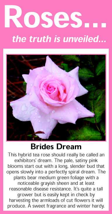 006 Brides Dream