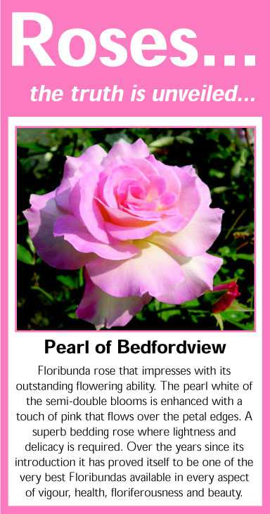 026 Pearl of Bedfordview