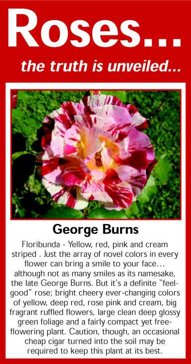 028 George Burns