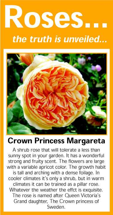 040 Crown Princess Margareta