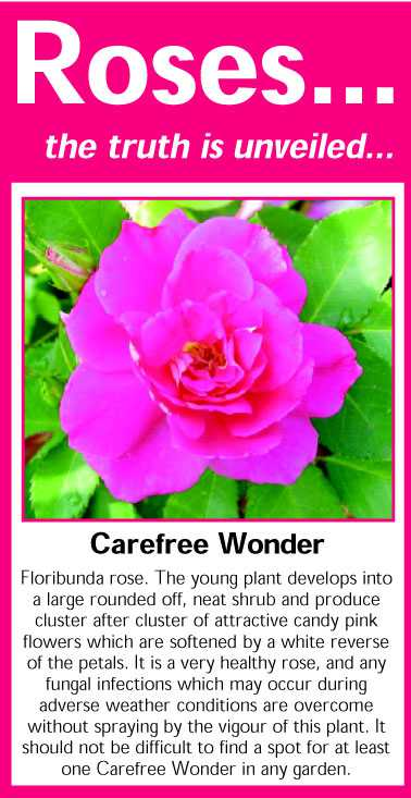 044 Carefree Wonder
