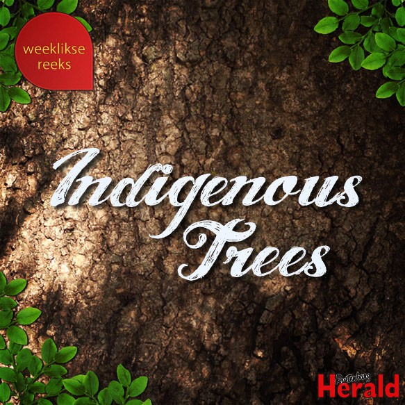 Indigenous Trees