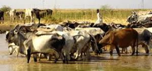 RIFT VALLEY FEVER A CONCERN