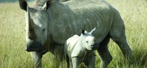 Four rhino poachers sentenced