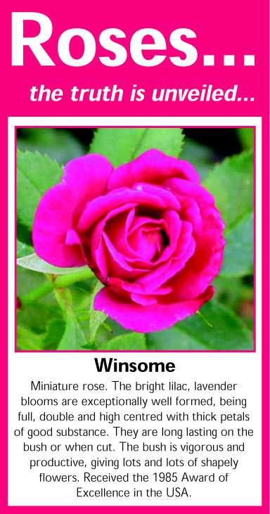 019 Winsome